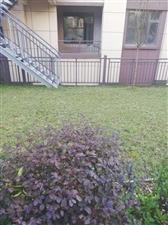 新天地花园洋房送40平私家花园