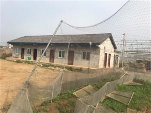 枝江城区新318国道旁200米房屋土地出租