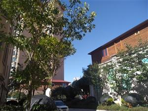 龙园小区133平米步梯房57万楼层佳