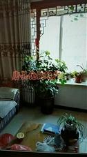 福祥花园3室,精装,全款