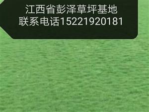 湖口綠建草坪批發