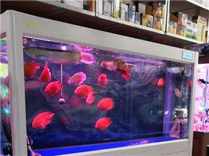 2.0米白橡木魚缸出手