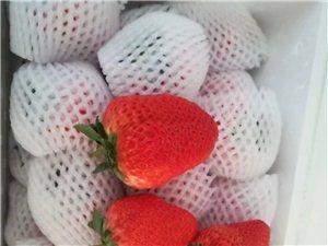 出售丹东九九草莓