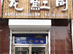唐縣龍魟閣水族館年底聚惠來襲