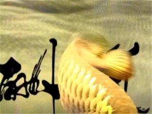 阎良森森水族鱼缸观赏鱼专卖