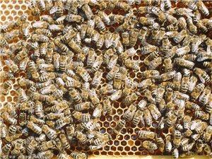 蜂蜜、蜂皇漿、花粉、蜂膠、蜂蠟