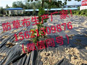 防草布除草布园艺地布