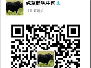 出售正宗草膘牦牛肉
