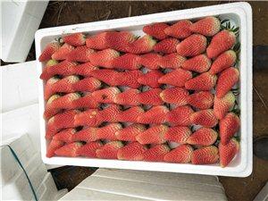 草莓上市  好吃不贵