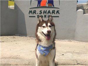 Mr.shark寵物酒店 專業寄養 正向訓練