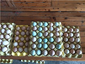 太和土雞土雞蛋