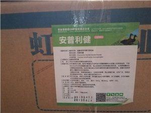 肉鹅养殖技术培训鹅厂技术服务