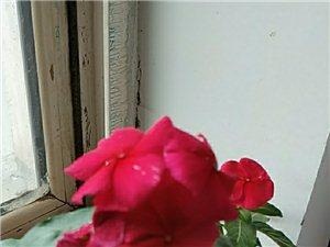 出售自家养6~7年的花卉