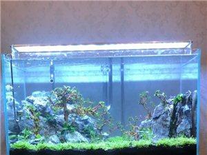山木生态鱼缸
