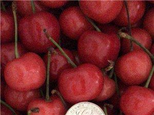 每天去南昌水果市场进新鲜水果满88进贤送货上门