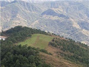 500多亩林地寻求合作伙伴