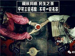 千年藏茶/百年老廠/洛陽招分銷商