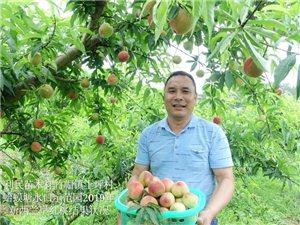 新品种果树苗木销售
