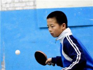 �o�O�h�W科乒乓球�^/青少年乒乓球培�中心
