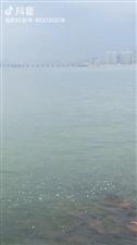 今日9点港珠澳大桥正式开通摄影:珠海度假村酒店摄影师梁才有