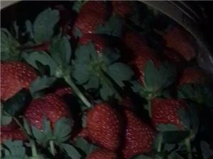 草莓直�N
