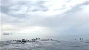 菲律宾海豚湾,第一次近距离接触这群高智商的家伙