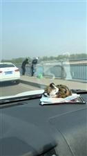 汝河桥上占据车道钓鱼,多大的瘾?
