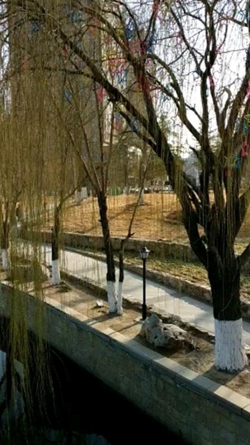 泰安泮河景区