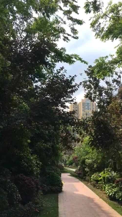 武胜御景湾小区的绿化是真的好