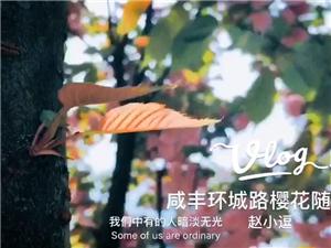 咸丰环城路樱花随手拍?