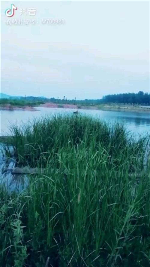 湿地公园一角