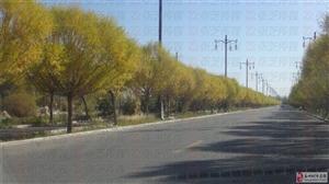 瓜州张芝公园