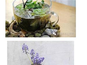 创意养花:废物利用 瓶瓶罐罐DIY精致的家居装饰盆栽