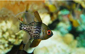 居家养鱼的一些风水知识禁忌