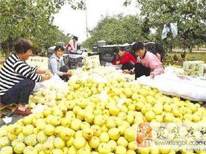 【宿州市水果产业化发展势头迅猛】