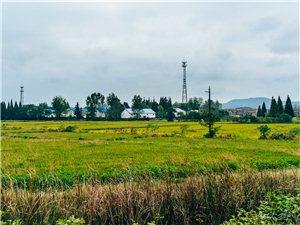 秋天的田野