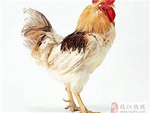 鸡最宝贵的部分却常被我们扔掉,做成家常菜不仅营养还有治病功效