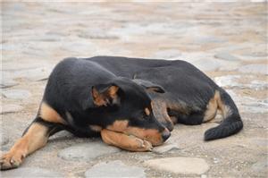 对狗狗品种熟悉的朋友,能解答下吗