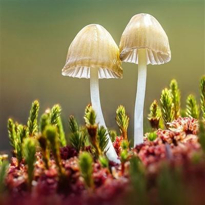 拍蘑菇的摄影师