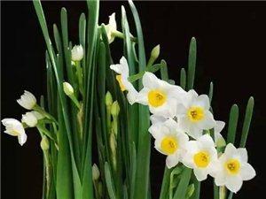 家里养了这些花,身体早晚要病垮!这10种花室内最好别养!