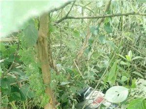 【高州新闻】康垌一金毛仔开车飞入树林,结果……