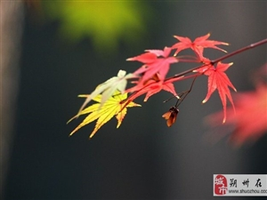 爱说旅行,来啊,看秋!