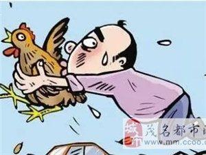 茂南镇盛镇家禽频被盗,村民要警惕啊!