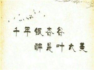 汉川宝中旅行社
