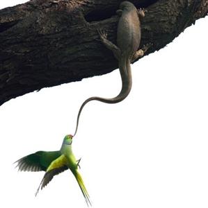 十佳野生动物摄影作品