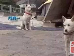狗狗与流浪母狗生下一窝,流浪狗带着孩子找上门了
