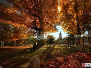 """遍览各地""""醉美""""秋色 落叶惊艳了时光"""