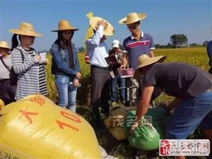 """省内外专家到高州石鼓镇验收""""超级稻""""品种!"""