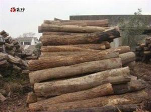 出售小叶桉木板 和各类木材加工