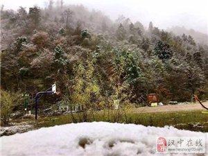 �h中又下雪了,黎坪�t�~�c白雪更配哦...
